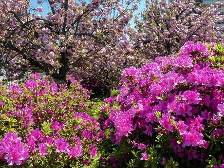 花は移ろい…_c0057946_19481340.jpg