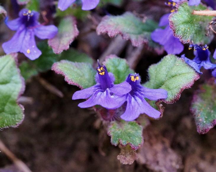 野の花にキジさんも_c0305565_17241742.jpg