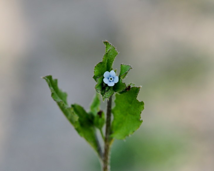 野の花にキジさんも_c0305565_17243940.jpg