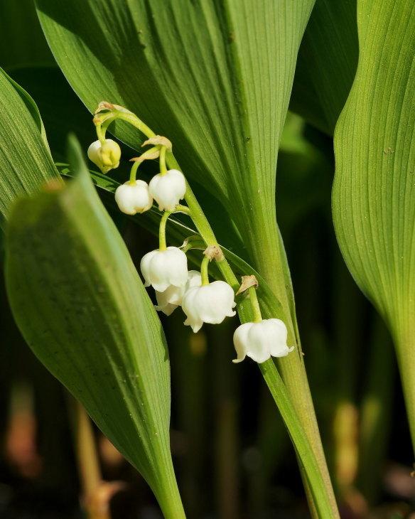野の花にキジさんも_c0305565_17270750.jpg