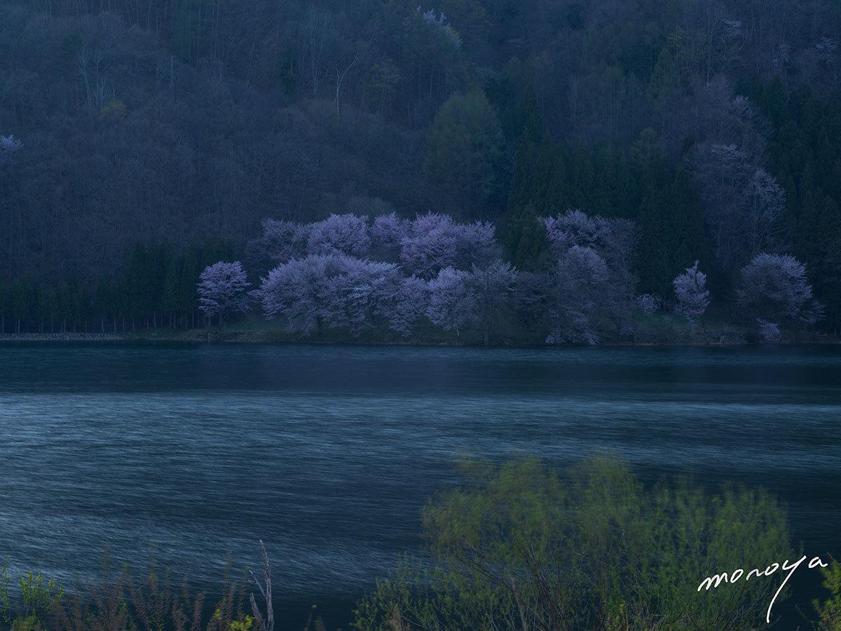 中綱湖の桜_c0085877_06320464.jpg