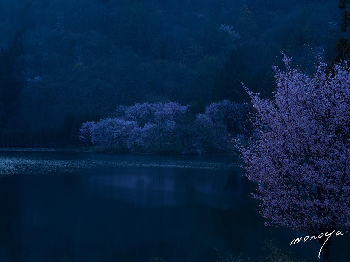 中綱湖の桜_c0085877_06321131.jpg
