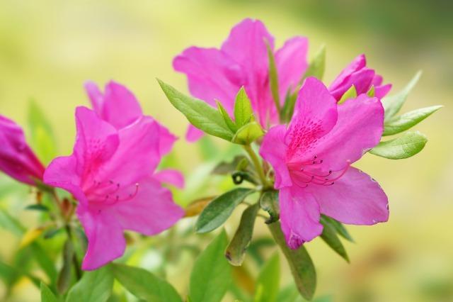 富浜緑地や楠緑地の花の紹介_d0338682_16113339.jpg