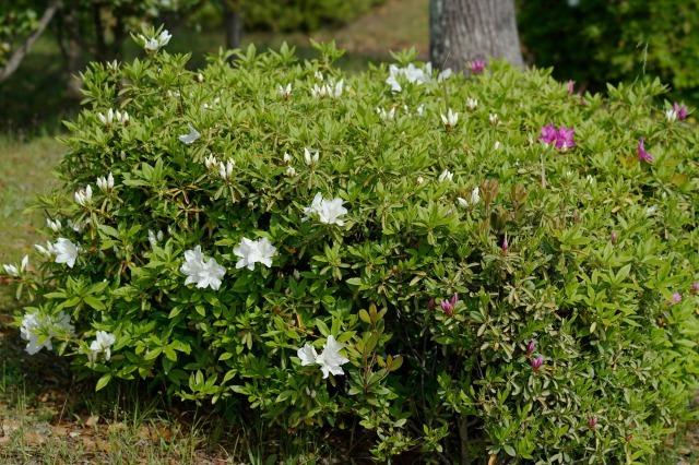 富浜緑地や楠緑地の花の紹介_d0338682_16131127.jpg