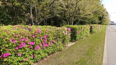 富浜緑地や楠緑地の花の紹介_d0338682_16144834.jpg