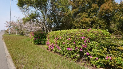 富浜緑地や楠緑地の花の紹介_d0338682_16162686.jpg