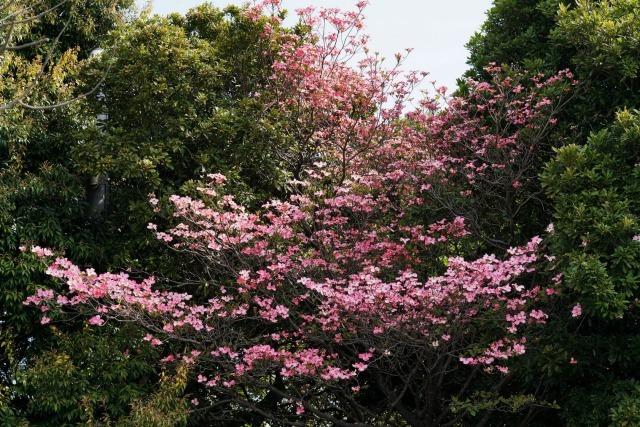 富浜緑地や楠緑地の花の紹介_d0338682_16183201.jpg