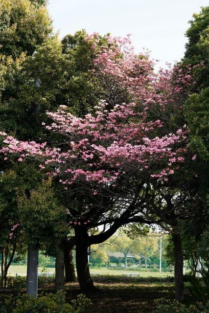 富浜緑地や楠緑地の花の紹介_d0338682_16224832.jpg