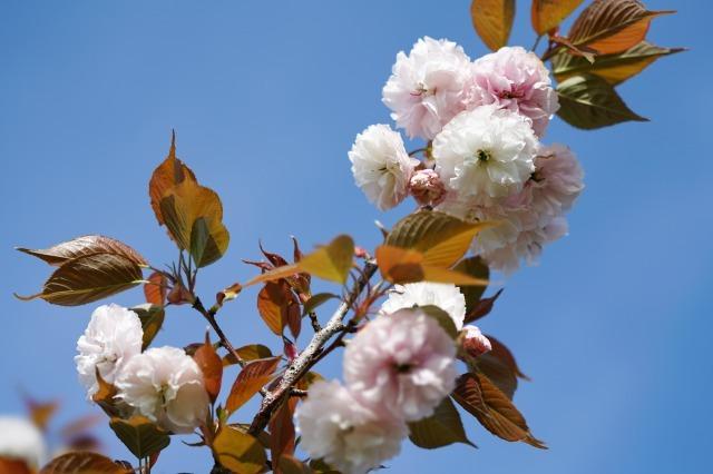 富浜緑地や楠緑地の花の紹介_d0338682_16281165.jpg