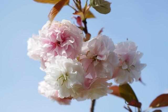 富浜緑地や楠緑地の花の紹介_d0338682_16282062.jpg