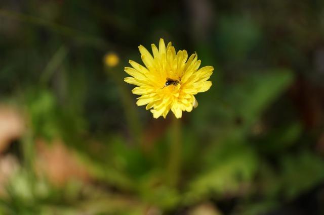 富浜緑地や楠緑地の花の紹介_d0338682_16311502.jpg