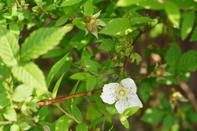 富浜緑地や楠緑地の花の紹介_d0338682_16333119.jpg