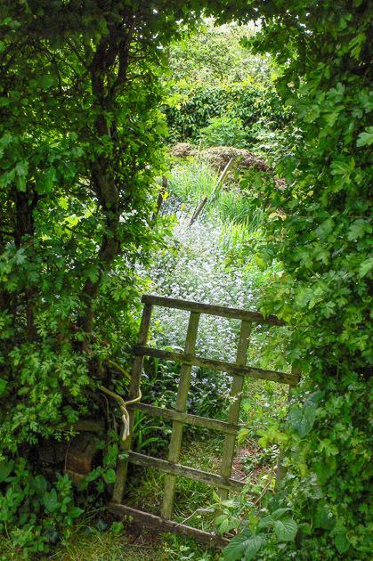 ガーデンの一番奥_b0234690_14442540.jpg