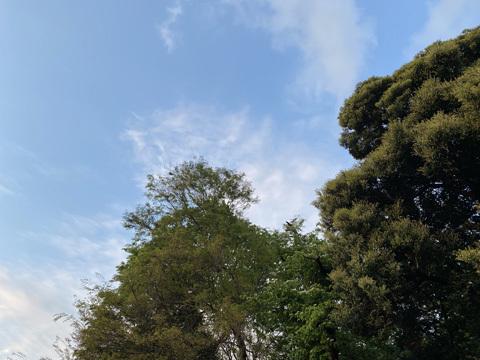 après la pluie : 雨上がり_f0038600_18351265.jpg