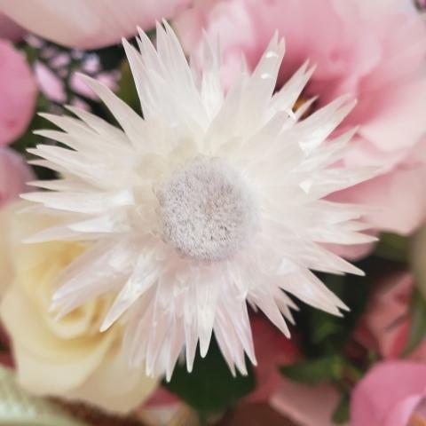 大写しの花たち_a0101801_05550998.jpg