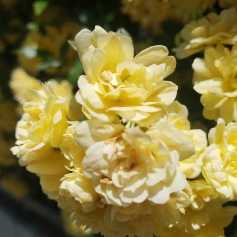 大写しの花たち_a0101801_05561290.jpg