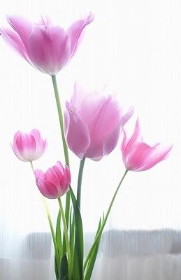 花に罪はないのに‥_e0289203_22460604.jpg