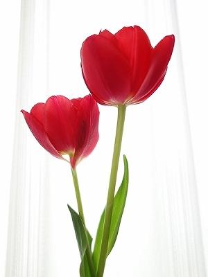 花に罪はないのに‥_e0289203_22460919.jpg