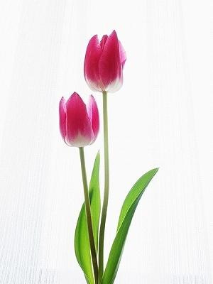 花に罪はないのに‥_e0289203_22461195.jpg