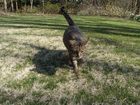 草取りに付き合う猫たち_f0064906_14182987.jpg