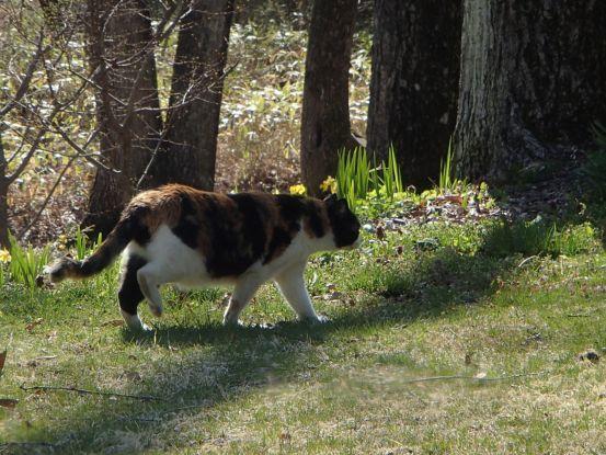 草取りに付き合う猫たち_f0064906_14183808.jpg
