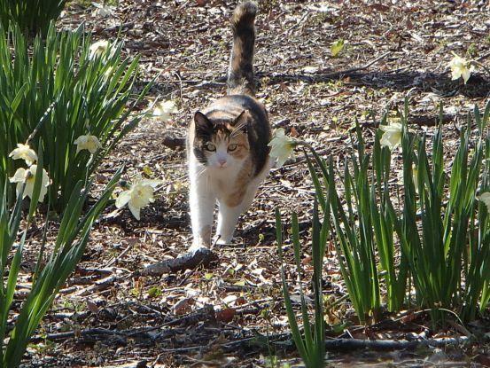 草取りに付き合う猫たち_f0064906_14184211.jpg