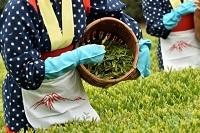 【今年の八十八夜は5月1日】お茶について投稿しよう!