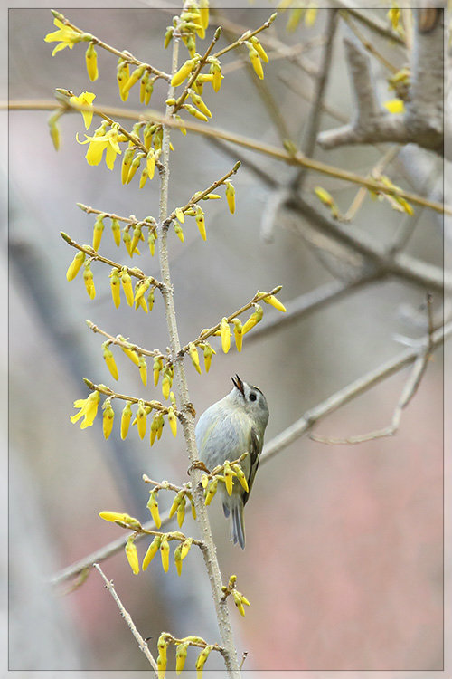 春のキクちゃん_e0235910_20044543.jpg