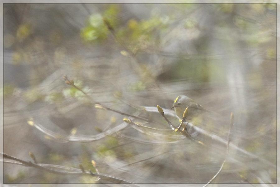 春のキクちゃん_e0235910_20072563.jpg