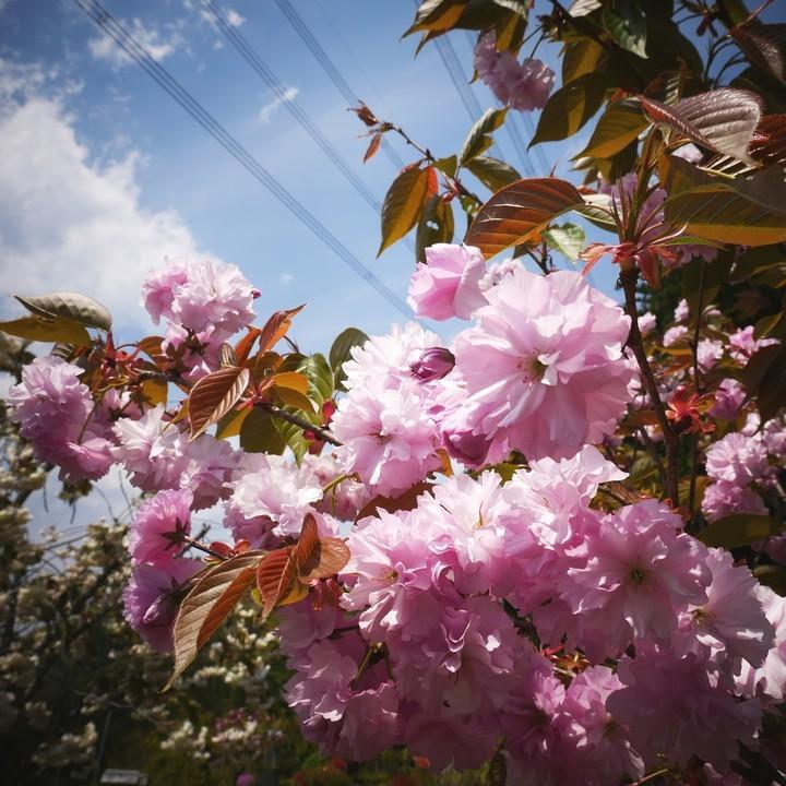 庭の春景色(その3)_a0268412_23115614.jpg