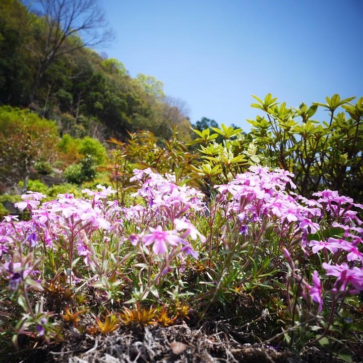庭の春景色(その3)_a0268412_23120066.jpg