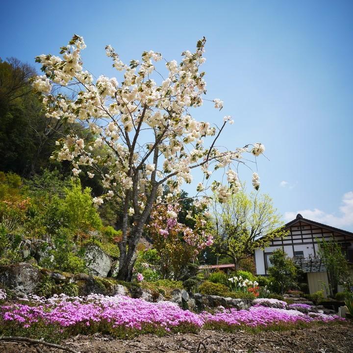 庭の春景色(その3)_a0268412_23120484.jpg