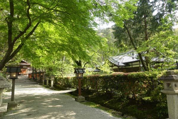 社家の道と太田神社の新緑_e0048413_21060356.jpg