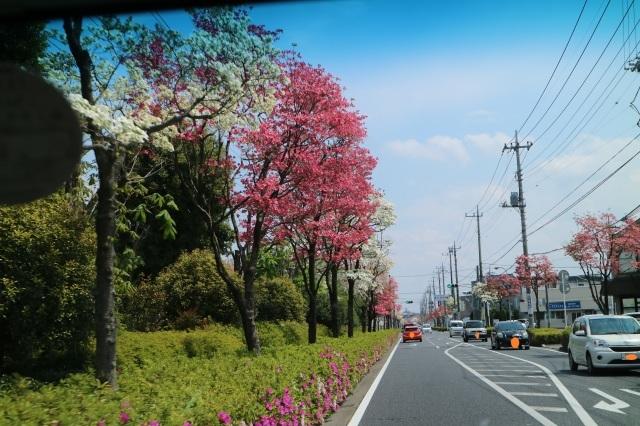 ハナミズキ通り_e0397815_23025310.jpg