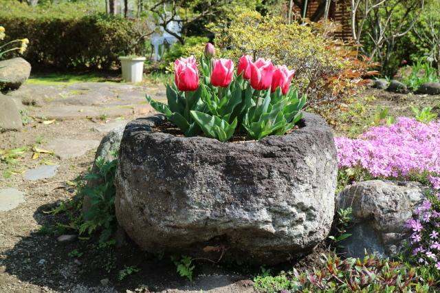 八重桜が咲いています_e0397815_23191928.jpg