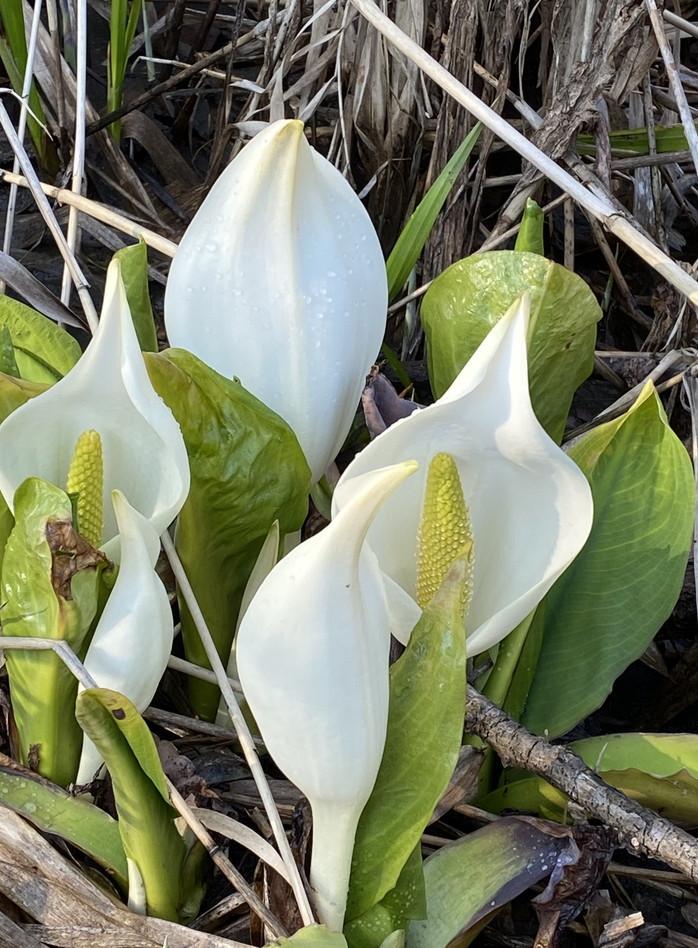 """2020年4月『北海道にコロナと春が来た』 April 2020 \""""Spring and COVID-19 have come in Hokkaido\""""_c0219616_21084753.jpg"""