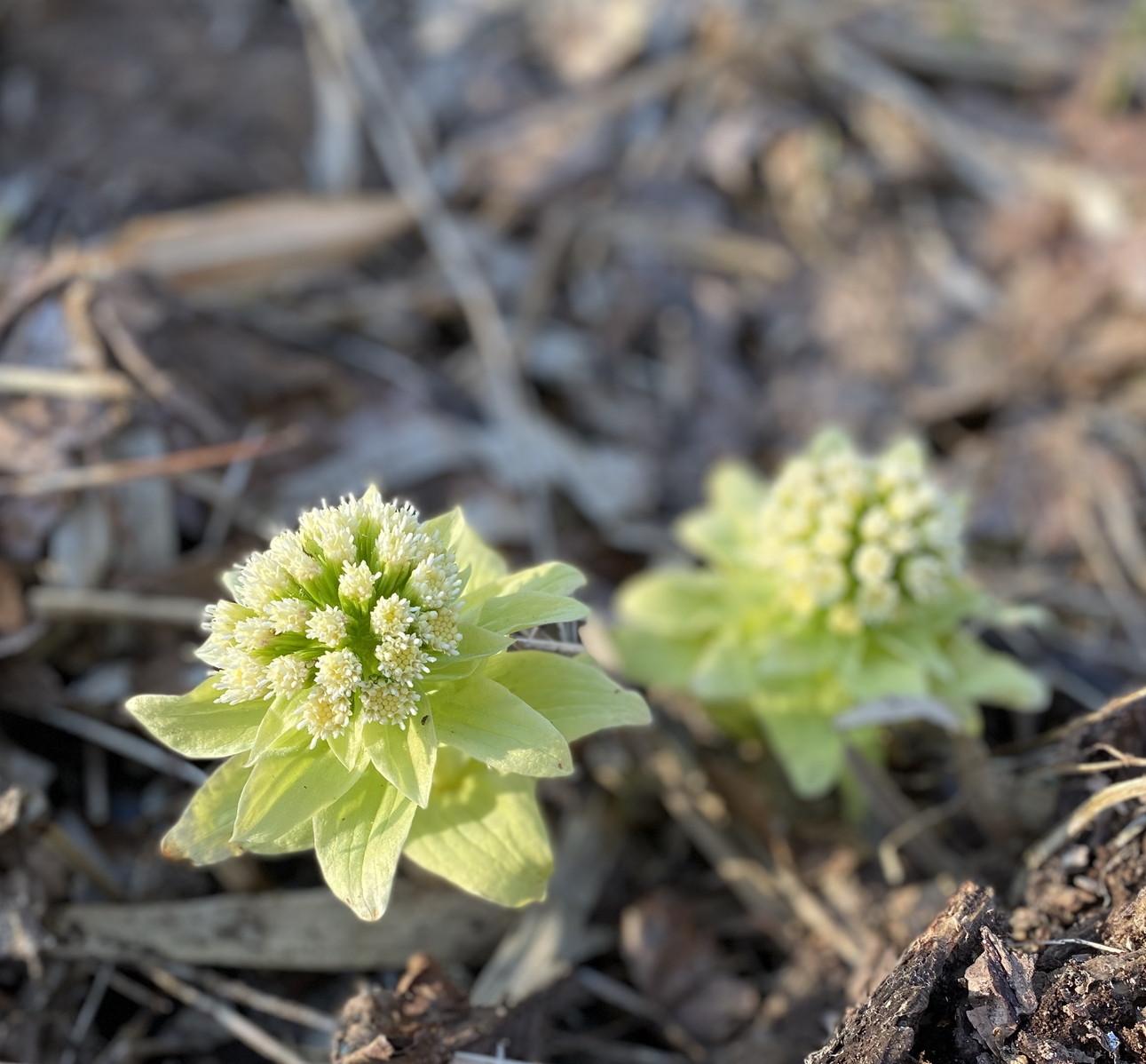 """2020年4月『北海道にコロナと春が来た』 April 2020 \""""Spring and COVID-19 have come in Hokkaido\""""_c0219616_21093303.jpg"""