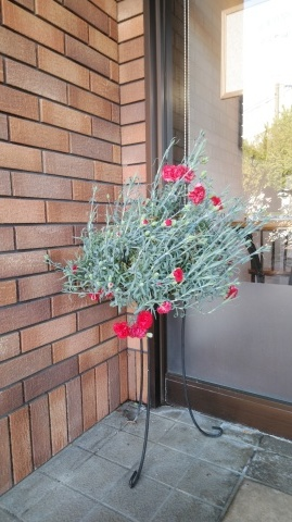 季節を店頭玄関先から。_d0144720_16332335.jpg