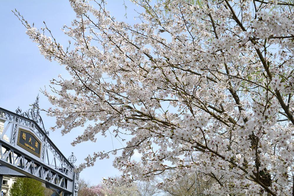 墨田川新大橋と桜_e0373930_22523894.jpg