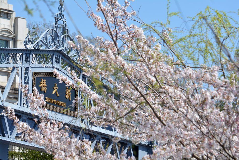 墨田川新大橋と桜_e0373930_22523921.jpg
