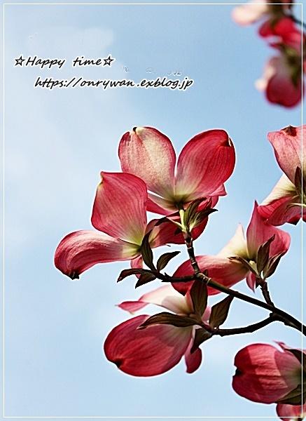 海老と筍の磯部揚げ弁当と花水木♪_f0348032_18144288.jpg