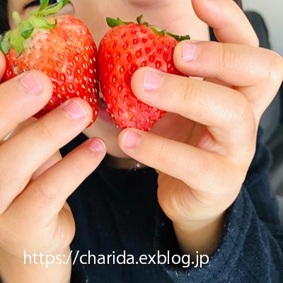 22 続いちご_c0092152_22294757.jpg