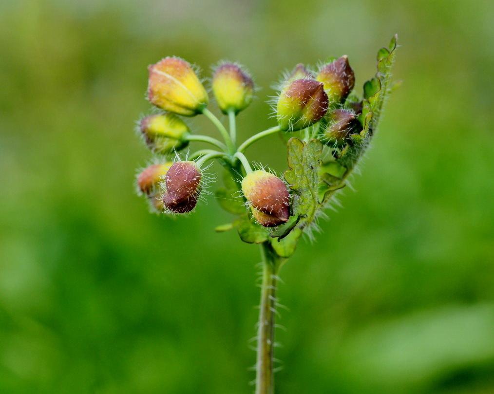 懐かしい野良で 花や虫_c0305565_17141268.jpg