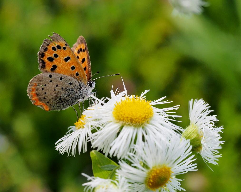 懐かしい野良で 花や虫_c0305565_17145141.jpg