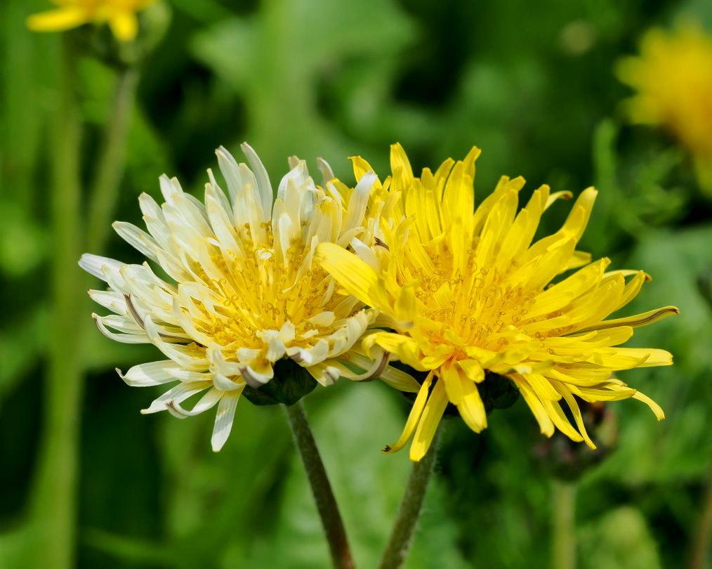 懐かしい野良で 花や虫_c0305565_17150748.jpg