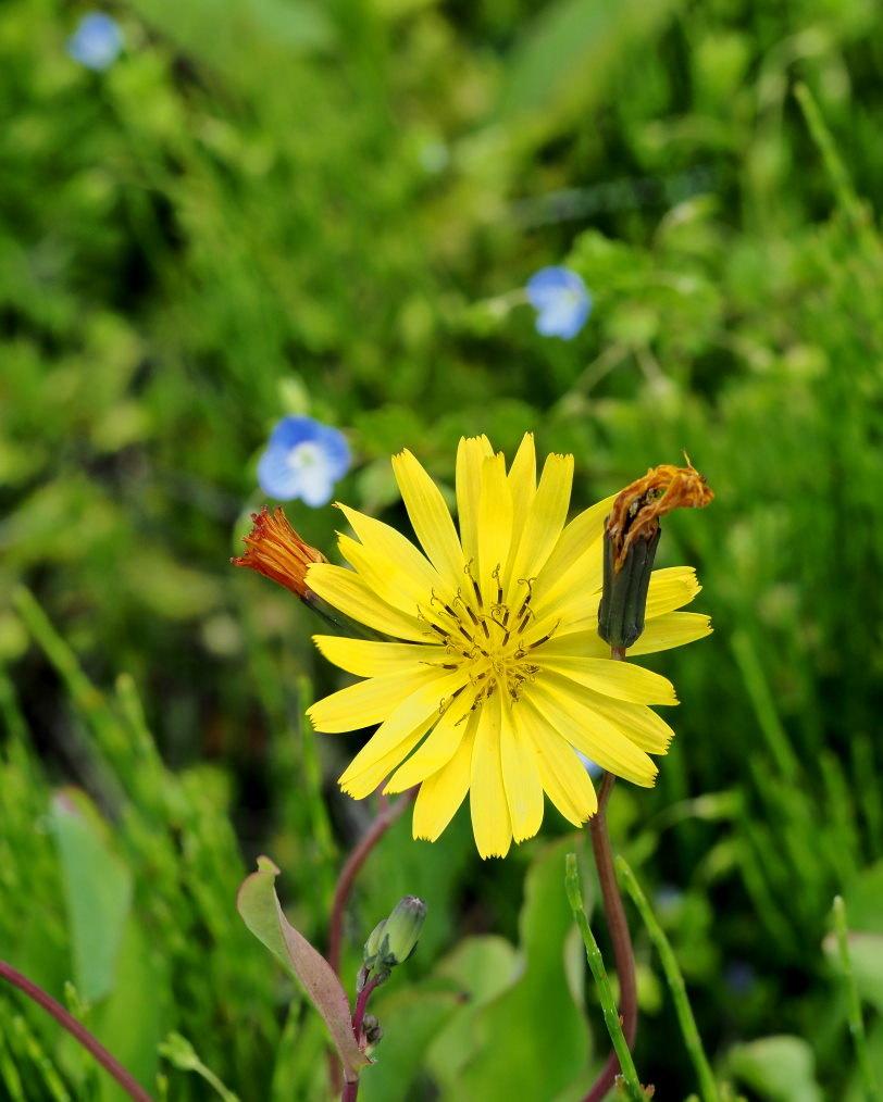 懐かしい野良で 花や虫_c0305565_17151983.jpg