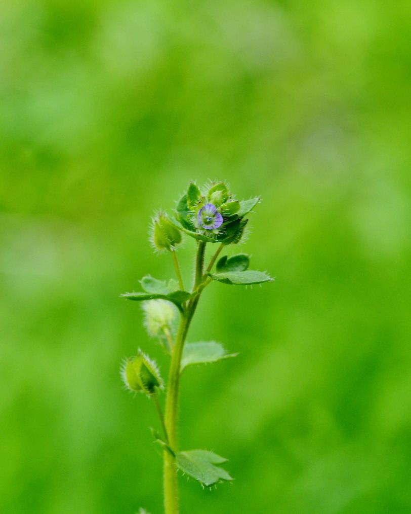 懐かしい野良で 花や虫_c0305565_17160182.jpg