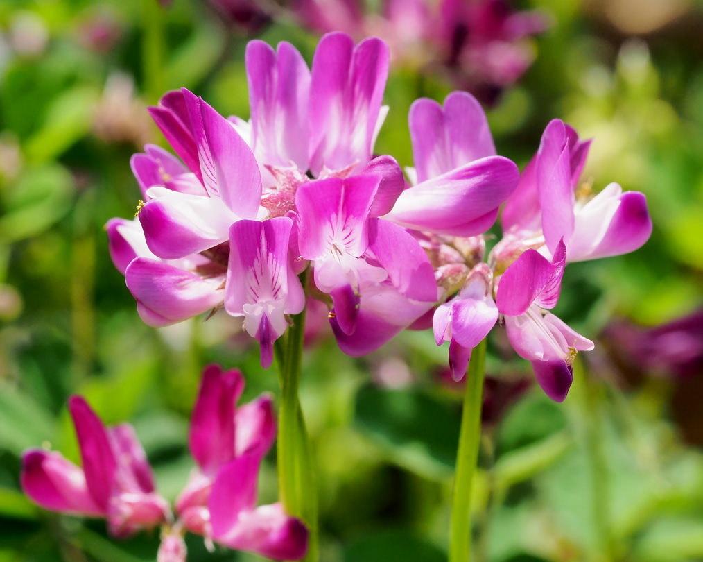 懐かしい野良で 花や虫_c0305565_17180962.jpg