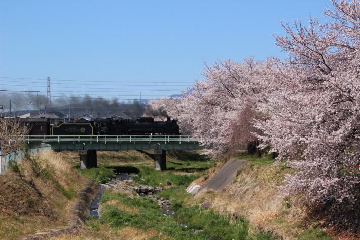 桜 PlayBack ~列車とのコラボ~_b0369971_10484403.jpg