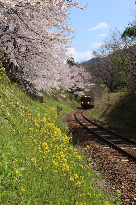 桜 PlayBack ~列車とのコラボ~_b0369971_10535727.jpg